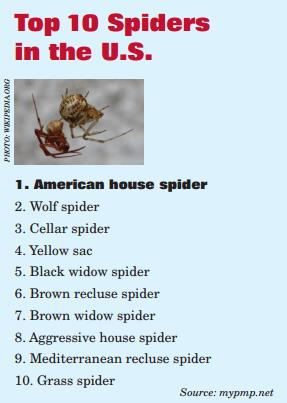 Top 10 Spiders in the US.jpg